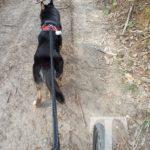 Heute hat Ares beim Berg hoch schieben ordenlich mit geholfen