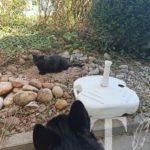 Eine der beiden Nachbarskatzen. Zwischenzeitlich durfte der Kater sogar an Ares Rücken schnüffeln als dieser relaxed da lag!